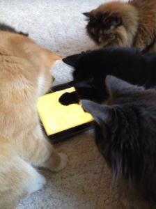 cats-with-ipad