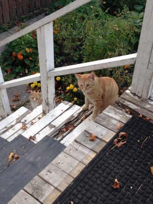 fall kitties.jpg
