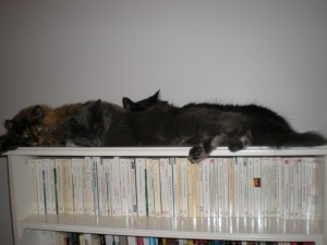 lux-and-her-two-boys-on-top-of-the-bookshelf