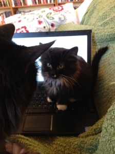 pax-on-laptop